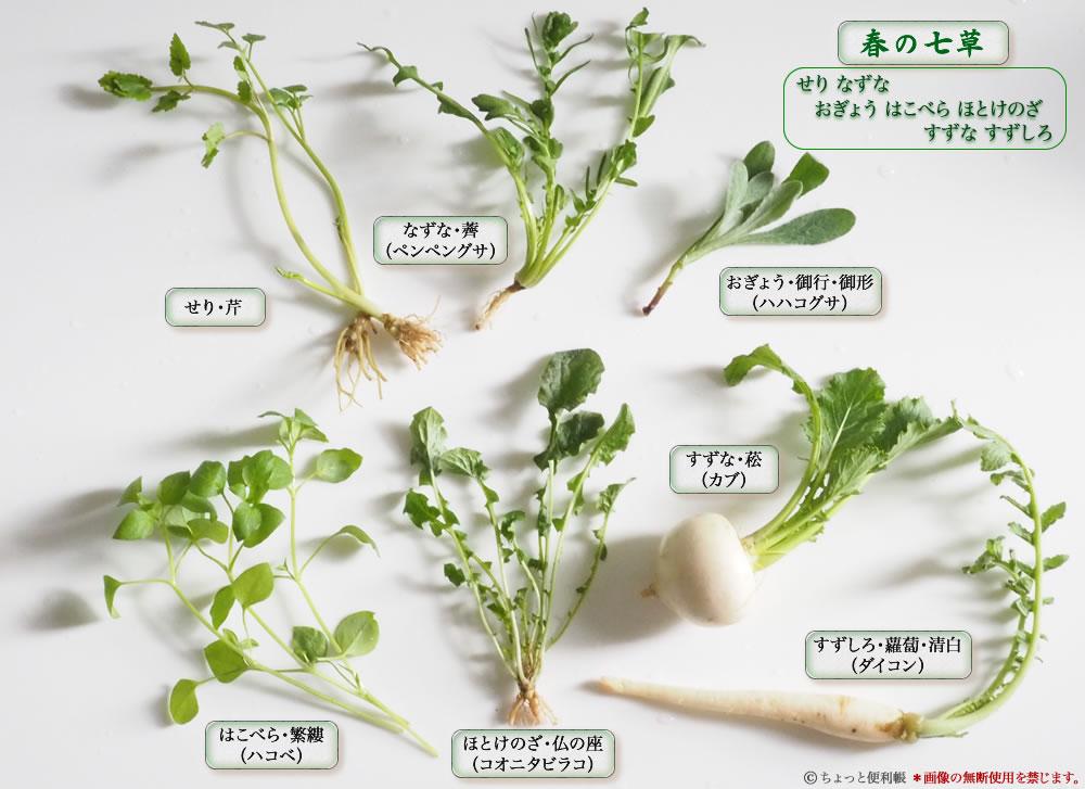 春の七草 イラスト